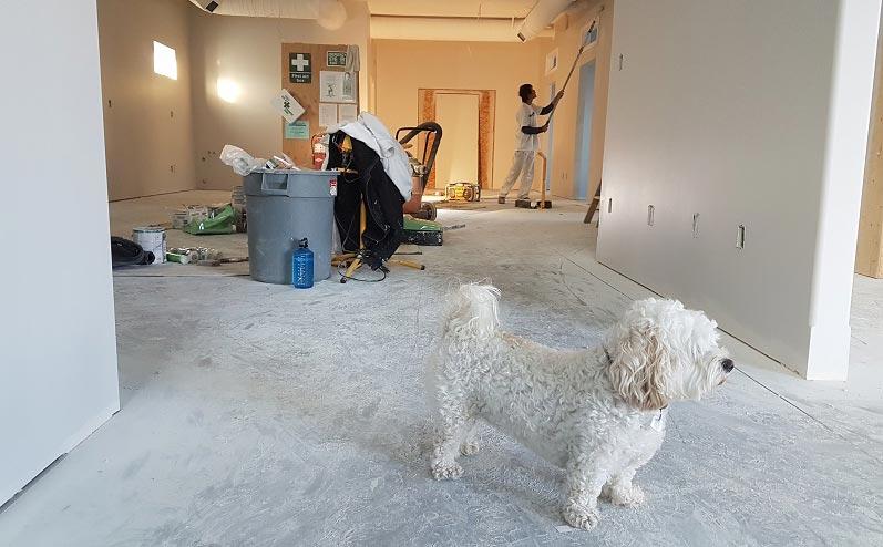 ремонт квартиры и собака