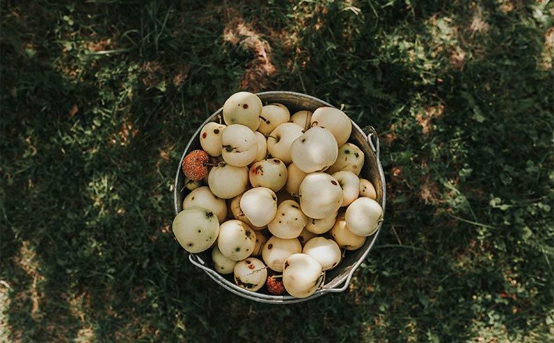 Latvija āboli