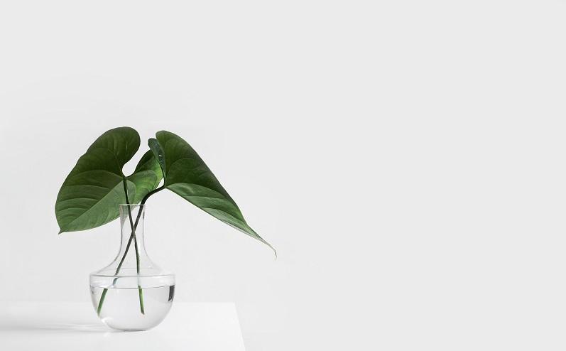 augs vāzē